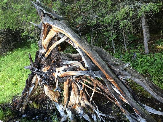 Habahe County, Chine : 森林公园里的大树桩