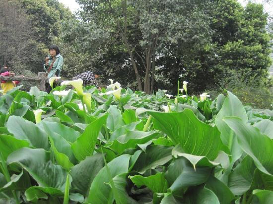 Xi'an Botanical Garden: 植物园