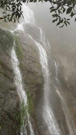 Tianmushan Scenic Aera: 雨后天目山