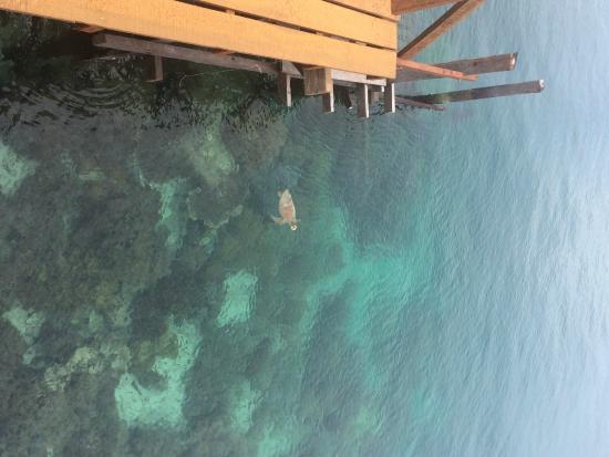 Borneo Divers Mabul Resort: 5