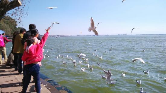 Haigeng Park: 海鸥