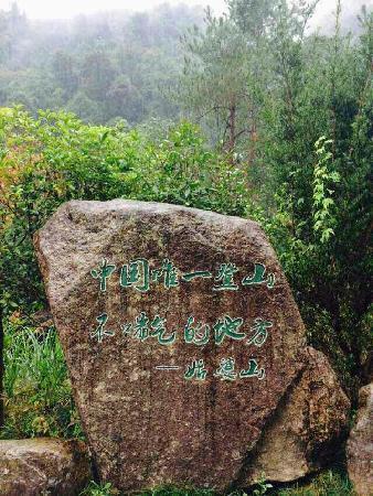 Mt. Gupo National Forest Park: 姑婆山