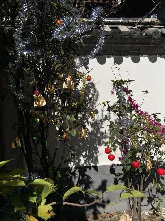 วาเหมา อินน์: 满树都是礼物…入住的自己摘,好开心