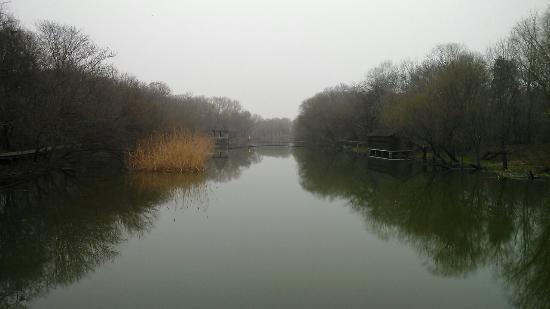 Phoenix lsles : 凤凰岛湿地