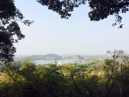 Sheshan Forest Park: 不错