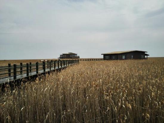 Chongming Dongtan Natural Reservation: 东滩湿地公园
