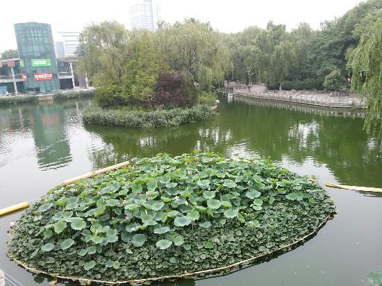 Quan City Park: 公园里的荷花池