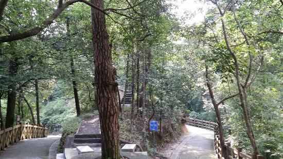 Liuxi River Forest Park: 森林小路