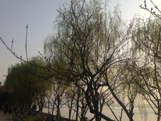 DuShu Lake: 春天。柳树。晴天。