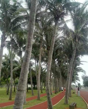 Wanlv Park: 万绿园
