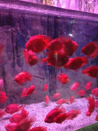 Ocean Aquarium of Penglai: 鱼