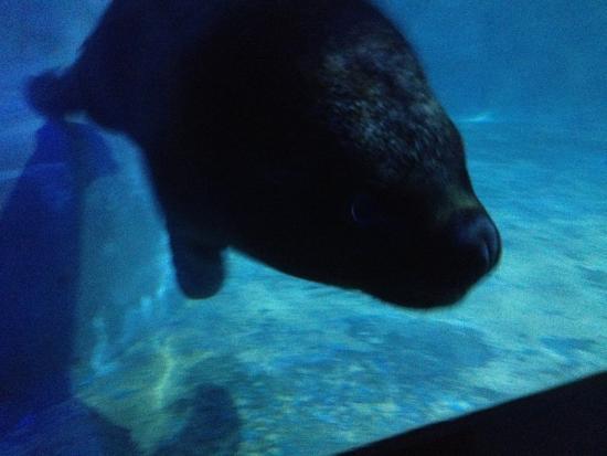 Ocean Aquarium of Penglai: 海豹