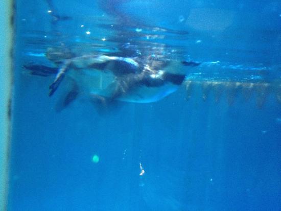 Ocean Aquarium of Penglai: 企鹅