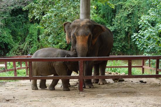 Mae Malai Elephant Training Camp