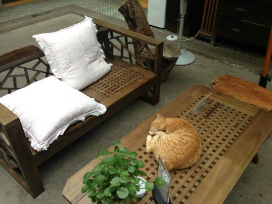 Gallery Inn Xiamen Gulangyu Shiwai Taoyuan: 那只猫好骚!