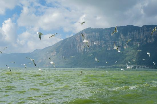 Haigeng Park: 红嘴鸥