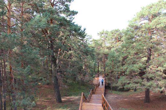 Hailaer National Forest Park: 名人峰下木栈道