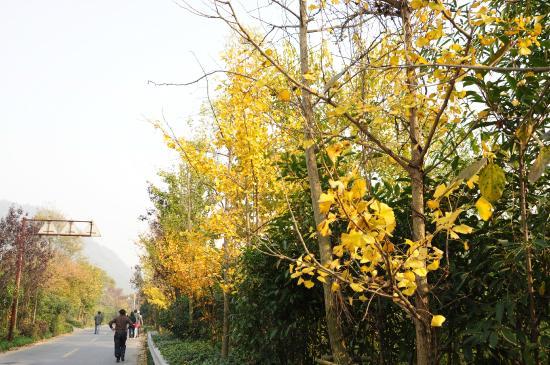 Changxing County, China: 十里银杏