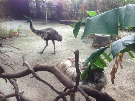 Guangzhou Crocodile Park : 鸵鸟