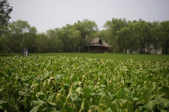 Jiangyan, China: 溱湖景色