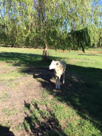 Deloraine, Australia: 好的让人感动的想哭!真的是太棒的住宿了。比五星级酒店还要棒!有牛有羊,还有一只鹿。房间里面又干净,一用俱全。超爱,下次有机会一定要再入住!