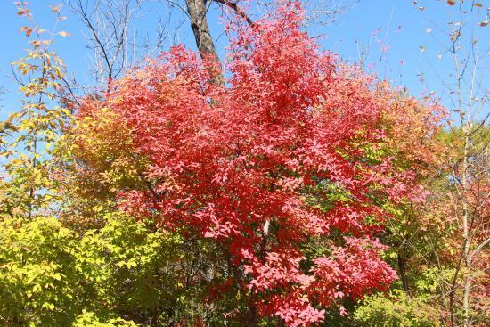 Jiaohe, จีน: 仅有的几棵红叶树