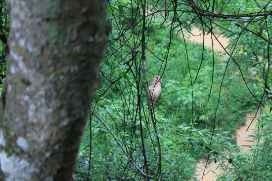 Xishuangbanna Rainforest : 野象