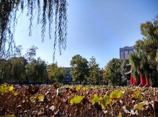 Sichuan University: 川大双荷池