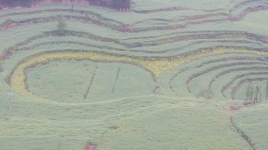 Luosi Field, Luoping: 没了花后的油菜地
