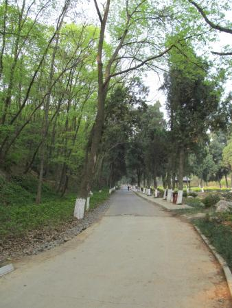 Gulongzhong Scenic Resort: 景区的路