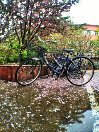 Fudan University: 上海复旦大学