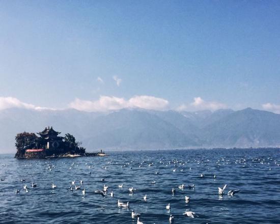 Erhai Lake: 海鸥