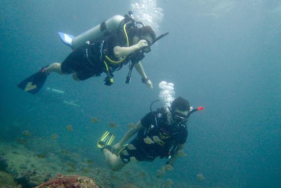 Super Divers: 可以说Super Diver带我开启潜水之旅,深深的中毒,回来之后只有马上计划下一次的旅行的才能稍稍缓解。1月12到1月14号三天的时间和老婆学习了OW。Darren教练认真负责,平时人超级n