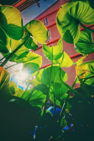 سيرلانا بوكت صورة فوتوغرافية