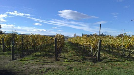 Waipara Springs Winery: 葡萄园