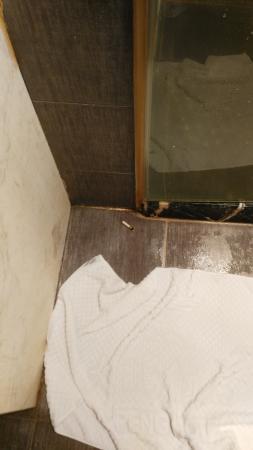 Dapeng Hotel: 你刚入住,太太就看到淋浴房外这个别人扔的烟头,你能不郁闷吗?