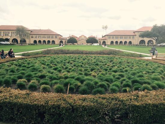 Palo Alto, CA: 一月份的时候过来的气候刚刚好