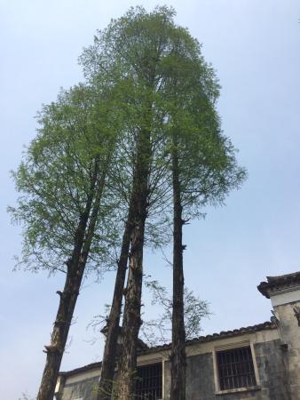 Jiangshan, Çin: photo3.jpg