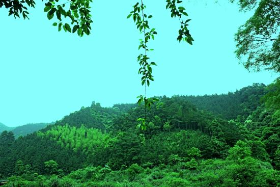 Zhongfang County, Chine : 康龙自然保护区