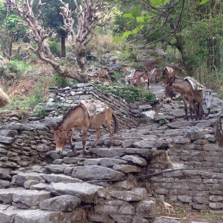 Bagmati Zone, Nepal: Himalaya Hub Adventure - Day Tour