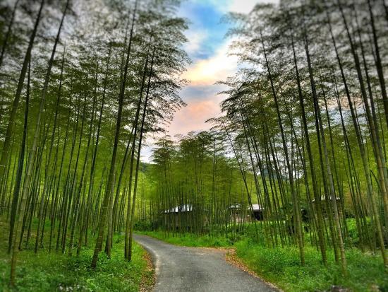 Anji County, Kina: photo0.jpg
