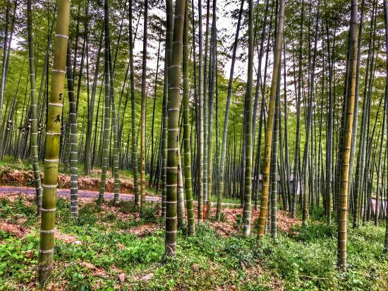 Anji County, Kina: photo6.jpg