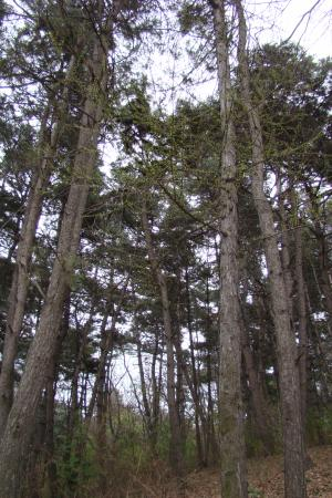 Longtan Mountain: 龙潭山树林