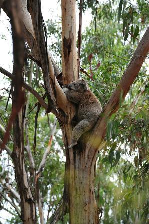 Cowes, Australia: DSC_9301_large.jpg