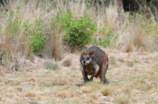 Cowes, Australia: DSC_9318_large.jpg