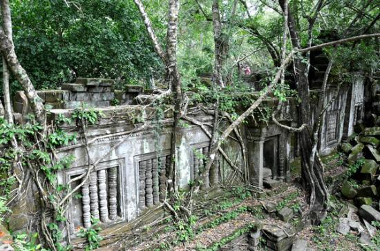 Siem Reap Province, كامبوديا: 建筑已经和密林融为一体,再也分不开了。