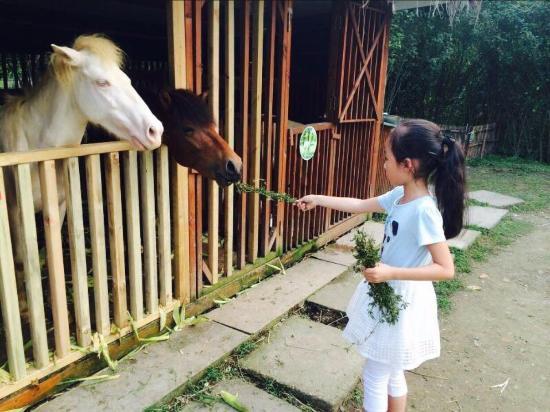hangzhou roots resort prices reviews china tripadvisor rh tripadvisor com
