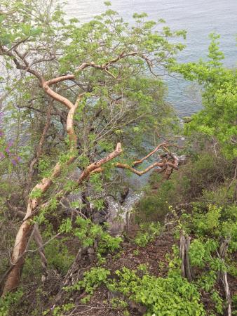 Paradise Flamingo Beach: photo5.jpg