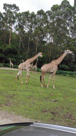 Chimelong Tourist Resort : IMG_20160521_140344_large.jpg
