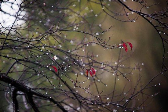 Jiashan County, Chine : 雨天中的西塘